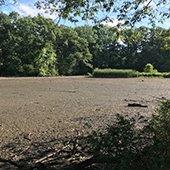 Mudflats on Horseshoe Lake in Shaker Heights